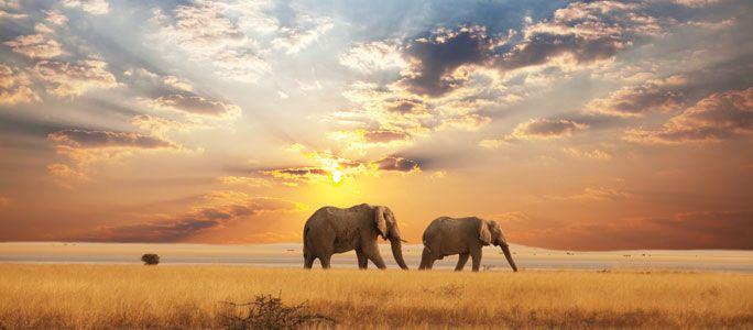 A palavra safári provém do árabe سفر (safara), que significa viagem.Fazer um safári é partir numa expedição por lugares selvagens, são jornadas para observação e fotografia da vida selvagem, uma oportunidade de observação a pé ou motorizada de animais selvagens.