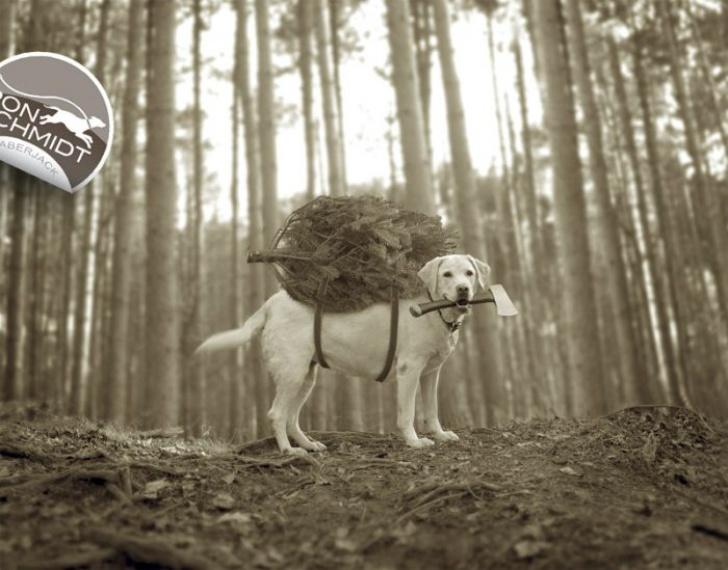 Cele mai amuzante FOTOGRAFII cu căţei