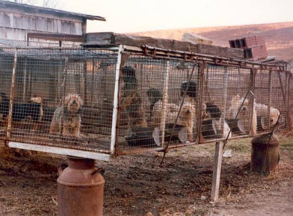 The HSUS has released its list of the worst 101 puppy mills in the US. Please be sure to let your friends and family know how horrible these places are... http://www.humanesociety.org/assets/pdfs/pets/puppy_mills/101-puppy-mills-report-2014.pdf
