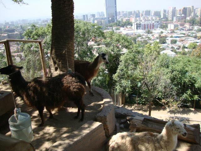 Santiago Zoo (Jardin Zoologico) - Santiago - Reviews of Santiago Zoo (Jardin Zoologico) - TripAdvisor