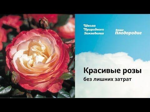 Красивые розы без лишних затрат - YouTube