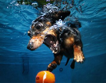 Honden worden enge monsters onder water