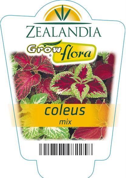 Coleus mix...