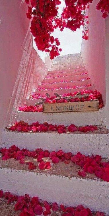 Bougainvillea blossoms in Santorini, Greece
