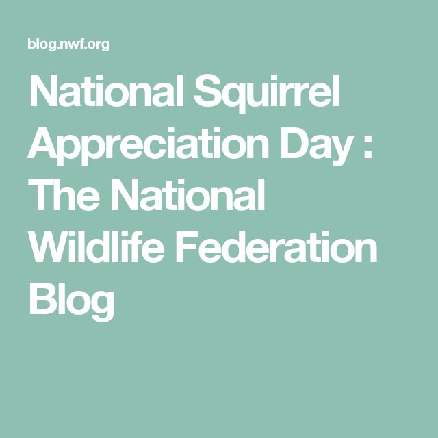 National Squirrel Appreciation Day : The National Wildlife Federation Blog