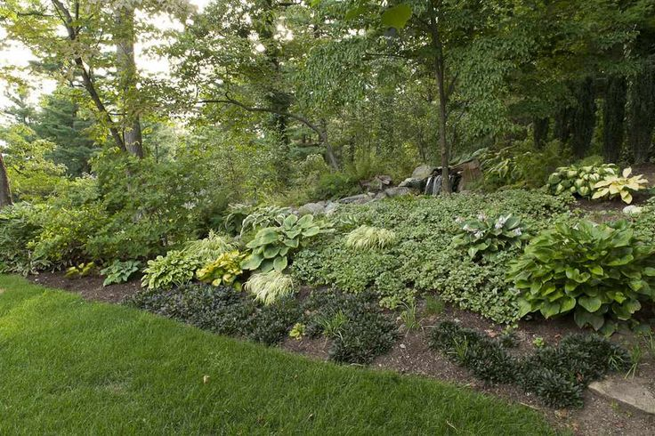 Backyard Hill Erosion :  prevent erosion on Pinterest  Erosion control, Plants and Blue rugs