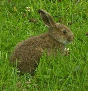 keeping rabbits out of your garden..have not yet read this so: if