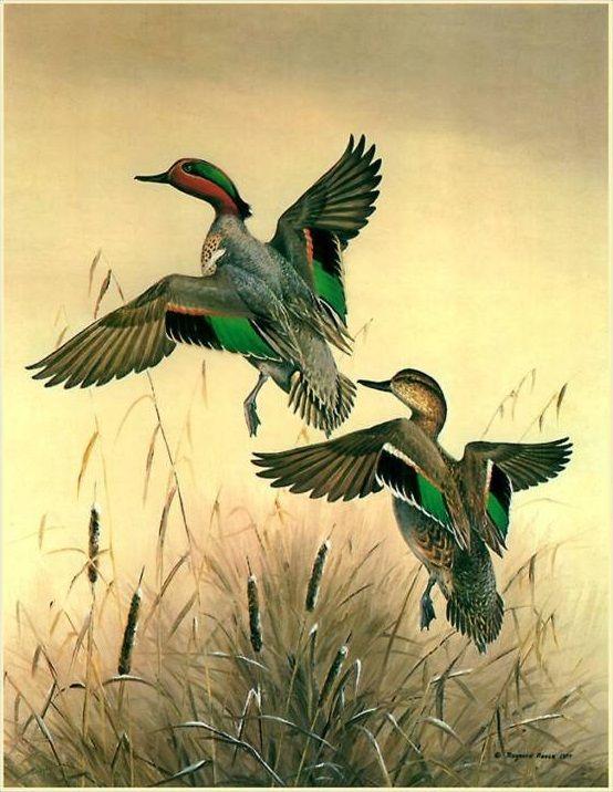 Открытки охота на птиц
