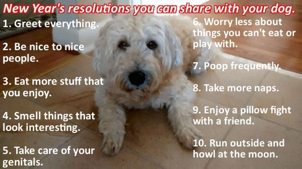 Dogs and New Year resolutions.