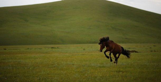 O genoma de um cavalo com 700 mil anos foi descodificado por investigadores. Este é considerado o mais antigo genoma alguma vez analisado até à data, informou a revista científica Nature.