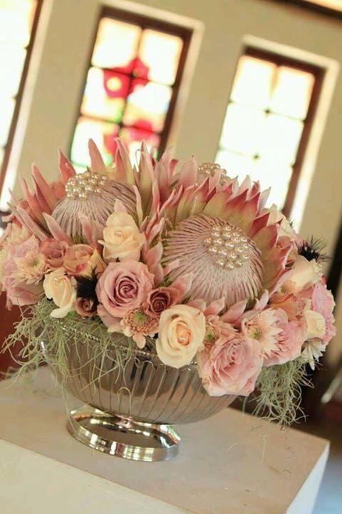 Protea pink