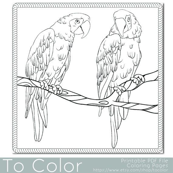 46 Best Coloriage Perroquet Images On Pinterest