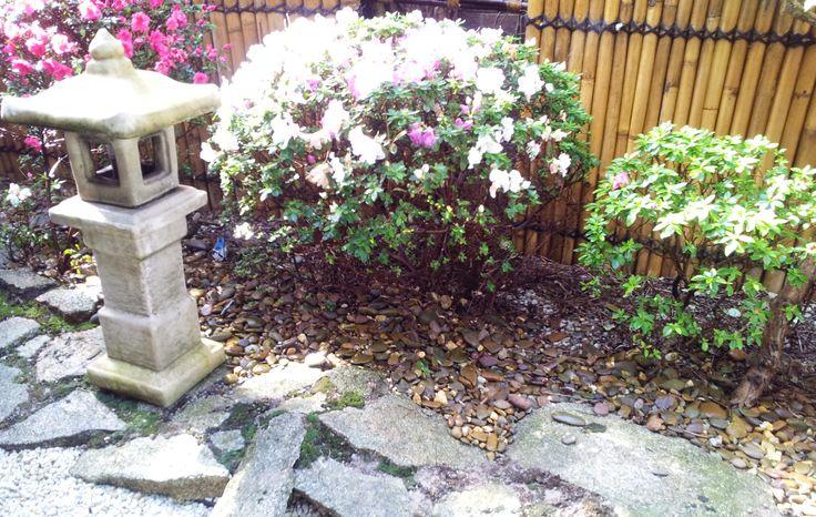 2011 Japanese lantern and azaleas