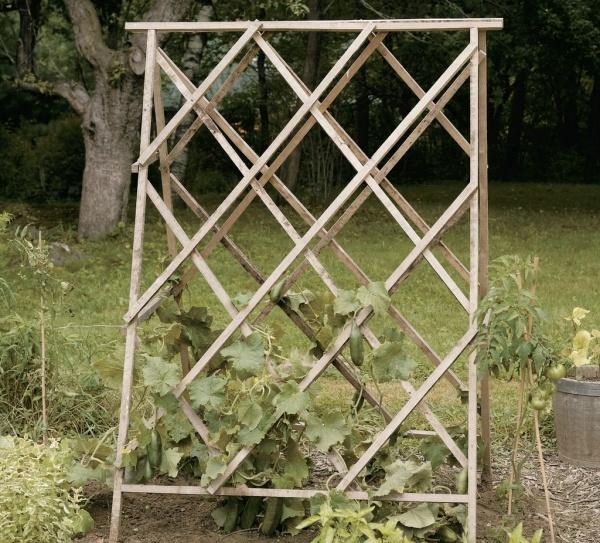 Homemade bean supports: Garden Design, Bean Supports, Fit Nicely, Design Ideas, Gardening Grow Food, Foot Width, Garden Stuff, Gardening Glory