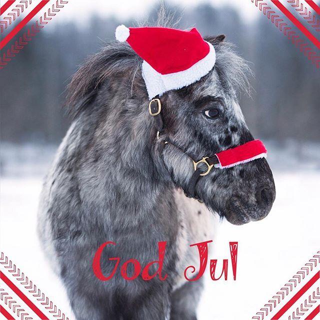 Vi på Stall Långvik önskar er alla ❤ en God Jul och ett gott nytt år #julistallet #ridskola #godjul #pixel