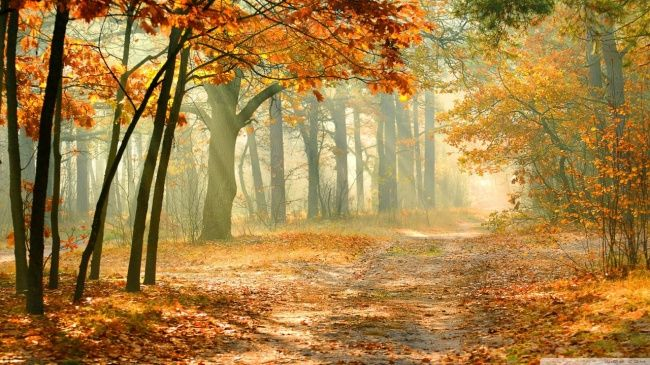 Beautiful Collection of HD Autumn Wallpapers