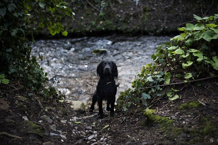 Reservoirs and Viaducts | Penryn Nature Trail | Woody's Walks