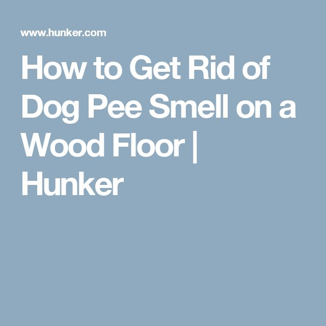 Best 25 Dog Pee Smell Ideas On Pinterest Removing Dog