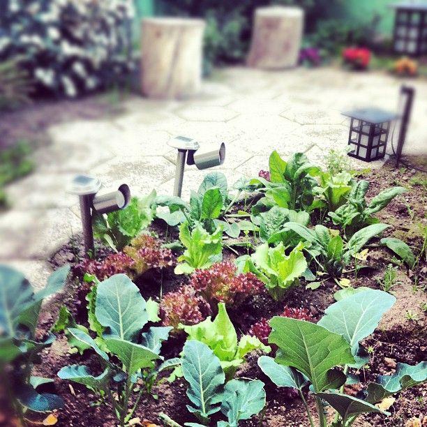 Decidimos volver a plantar este invierno, y para evitar que nuestra huerta se vea afectada por el frío armamos un pequeño invernadero que puedes ver paso a paso