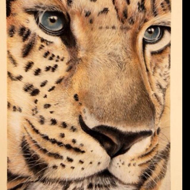 Amur leopard by www.jilltisbury.co.uk. From ref image by JohnTisbury