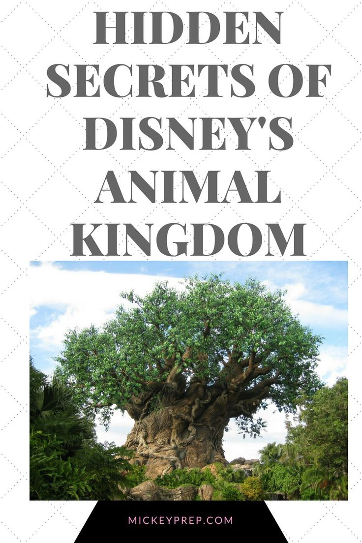 disney secrets animal kingdom