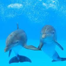 Dolphin social life