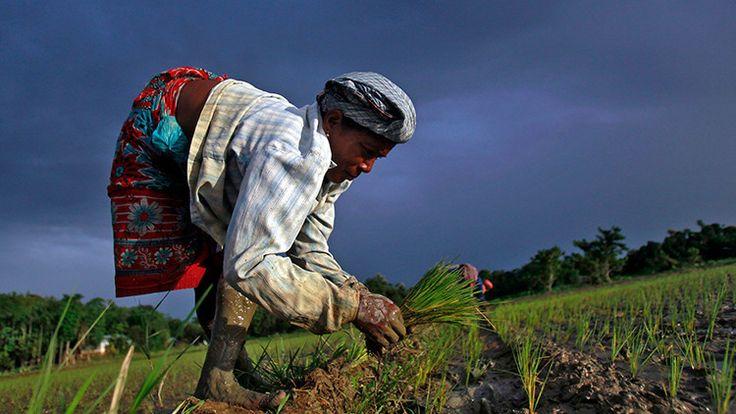 Más de 25.000 agricultores piden permiso para suicidarse al presidente de la India