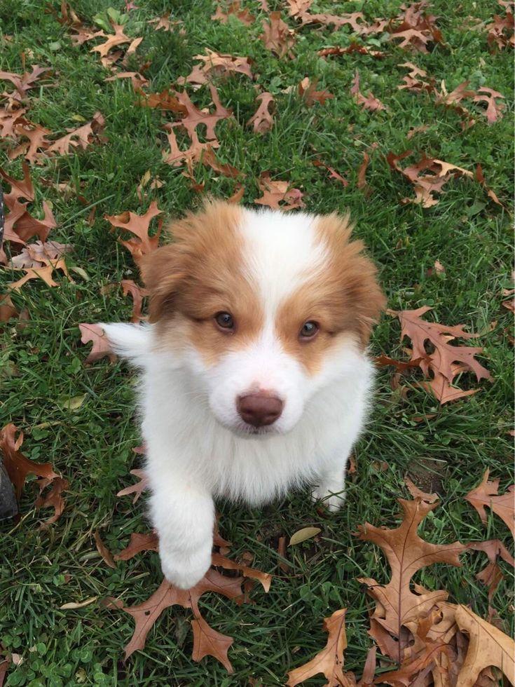 My Puppy Brother- Ryder http://ift.tt/2pZAEZy