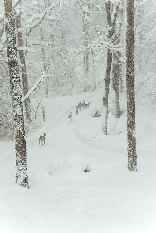 Deer in white park...: