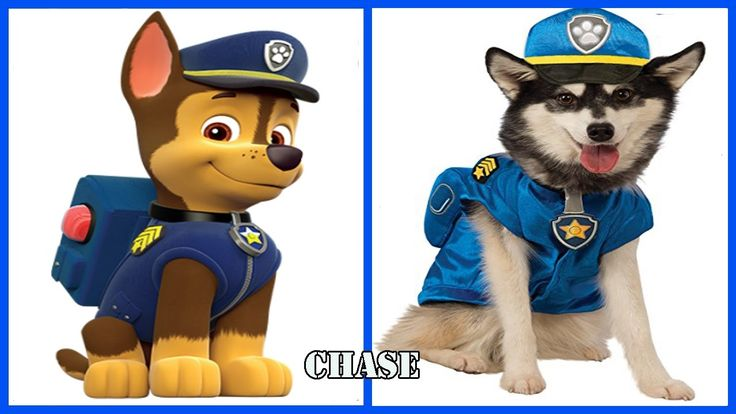 Paw Patrol Chase Dogs In Real Life - Fun Paw Patrol Cartoon Pictures