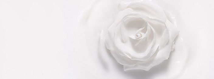 White Roses Background In 2020 White Roses Background Pink