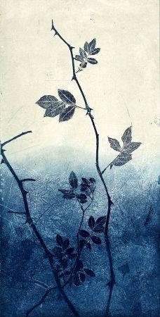 koistinen johanna-ruusu.jpg (228×450)