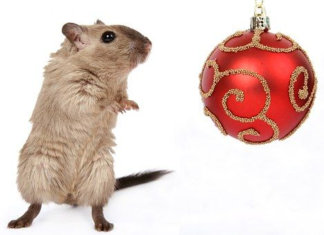 Animal, Celebration, Christmas