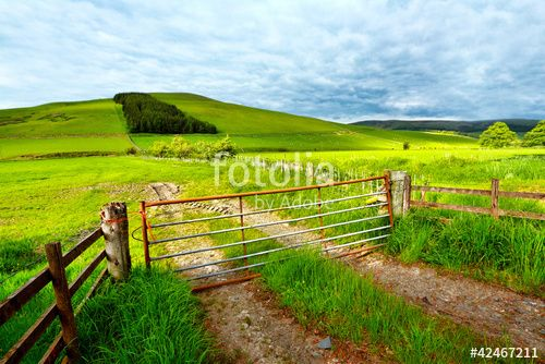 """Download the royalty-free photo """"Spring rural landscape in Scotland"""" created by JulietPhotography at the lowest price on Fotolia.com. Browse our cheap image bank online to find the perfect stock photo for your marketing projects!"""