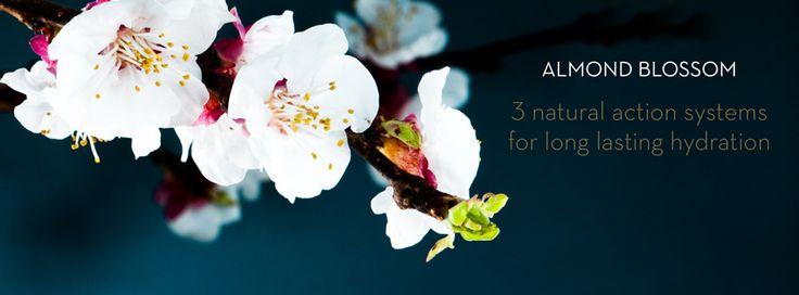 Almond Blossom #korres_skincare