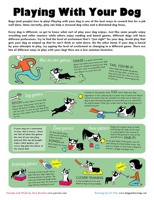 Playing with your dog and what it means
