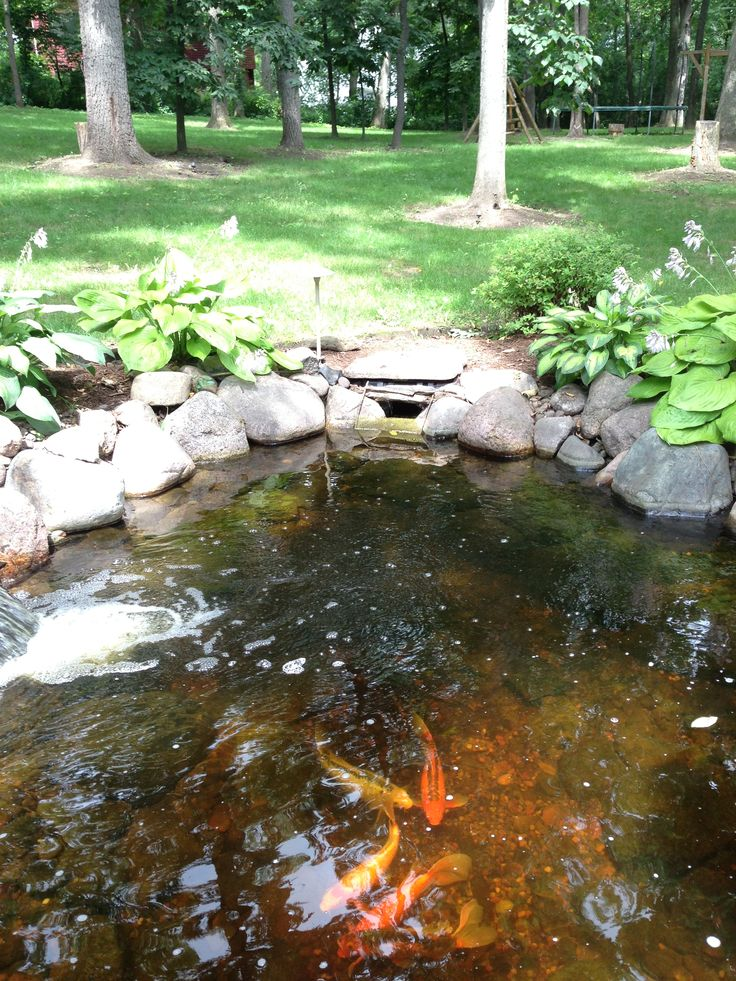 1000 images about pretty fish ponds on pinterest for Backyard koi fish pond