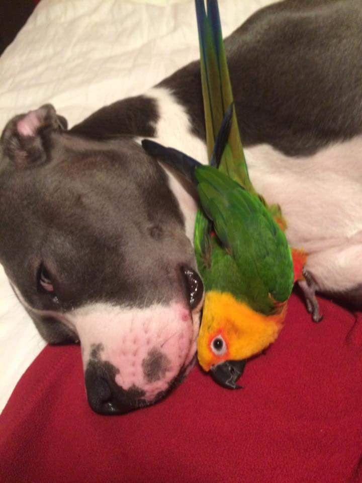 http://ift.tt/2t4qKXe pitbull attacks an innocent bird