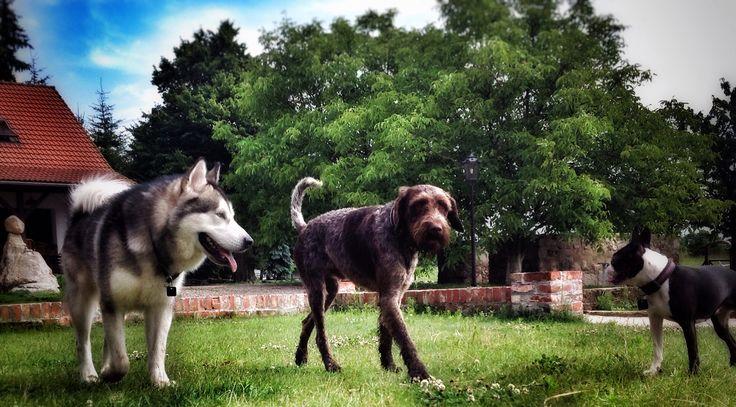Kralu and Sammy ..
