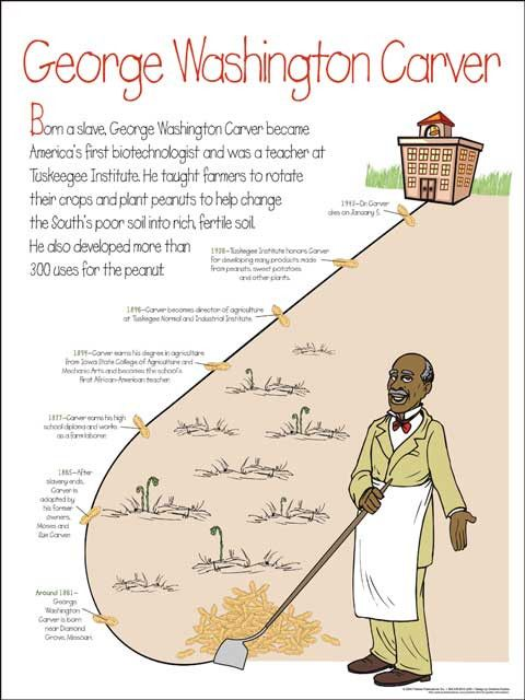 5 paragraph essay on george washington carver Essay on george washington carver 1242 words | 5 pages george washington carver was born into slavery january of 1860 on the moses carver plantation in diamond grove, missouri.
