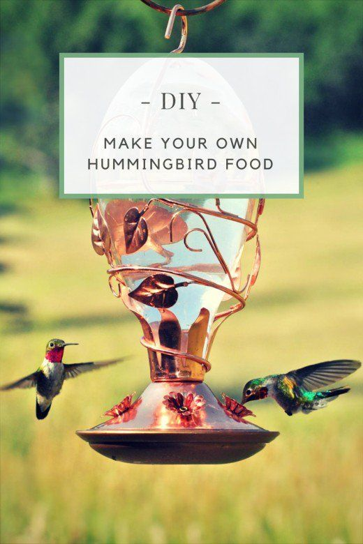 A guide on making nectar for hummingbirds. Includes information on the health benefits of homemade hummingbird food and how to store extra nectar.