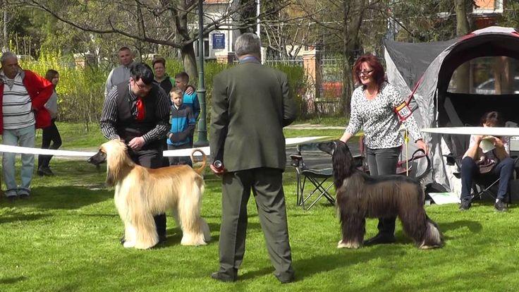 2016. Szerencs Dog Show.