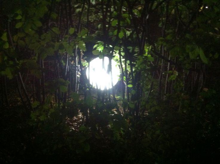 나무들 사이에 있는 전구인데 마치 달같다.