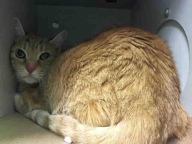 Cat Rescue Montgomery County Ny