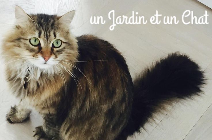 """43 gilla-markeringar, 3 kommentarer - Un Jardin et un chat (@nina_nasby_park) på Instagram: """"Hjälp, vi har fått en tonåring ! Casper kommer bara hem när han behöver sova, äta och gosa lite…"""""""