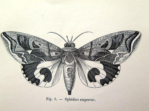 1860 antique moths butterflies print, original vintage moth plate, french lepidotera engraving, papillon butterfly illustration.  This original