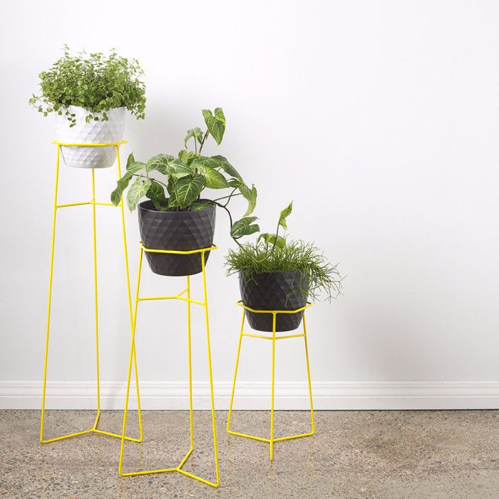 Collected & Trestle Union Plant Stands | Schweppes Yellow | Collected by LeeAnn Yare