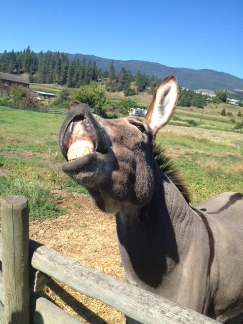 Flapjacks all excited that we'll be opening soon. Don't forget to pick up your seasons passes. Historic O'Keefe Ranch | 9380 Hwy 97N, Vernon, BC V1T 6M8 | Phone: (250) 938-0937