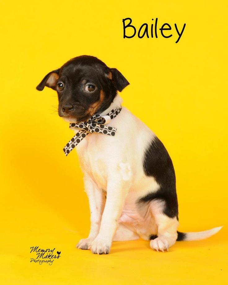 Bailey at Saving Death Row Dogs Topeka Ks Adopt Me Love
