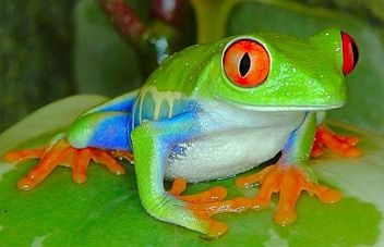 cute frog photos | Funny Animals: Cute Frog New Photos
